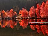 Baum gegen Baum Fotografie-Druck von Philippe Sainte-Laudy