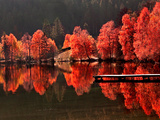 Árboles contra árboles Lámina fotográfica por Philippe Sainte-Laudy