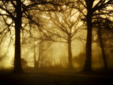 Yellow Morning Photographic Print by Philippe Manguin