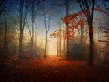 Sunrise in the Brocéliande Forest Fotografie-Druck von Philippe Manguin