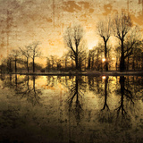 Mørk, reflekterende skog Fotografisk trykk av Philippe Sainte-Laudy