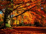 The Tree Premium fotoprint van Philippe Sainte-Laudy