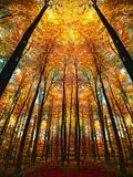 Høstskog med lys Fotografisk trykk av Philippe Sainte-Laudy