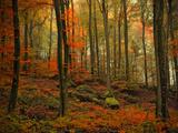 Transformation des Herbstes Fotografie-Druck von Philippe Sainte-Laudy