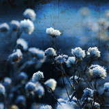 Bouquet Bleu Reproduction photographique par Philippe Sainte-Laudy
