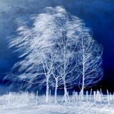 Blå vind Trykk på strukket lerret av Philippe Sainte-Laudy