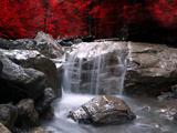 Rode visie Fotoprint van Philippe Sainte-Laudy