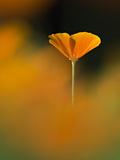 Orangina 写真プリント : ウルスラ・アブレシュ