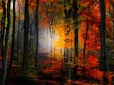 Lichtkleuren Fotoprint van Philippe Sainte-Laudy