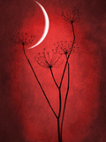 Rouge lune Reproduction photographique par Philippe Sainte-Laudy