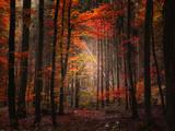 Bosque Orton Lámina fotográfica por Philippe Sainte-Laudy