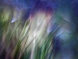 Needles Fotografisk tryk af Ursula Abresch
