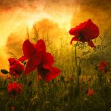 Rött för kärlek Fotoprint av Philippe Sainte-Laudy