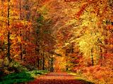 Herbstlicher Weg Fotografie-Druck von Philippe Sainte-Laudy