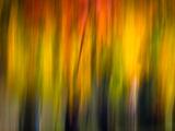 Fall Light 2 写真プリント : ウルスラ・アブレシュ