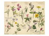 Wildflower composite Gicléedruk van Lilian Snelling