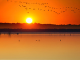 Migratory Birds Photographic Print by Marco Carmassi