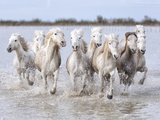 Running Wild Horses Photographic Print by Marco Carmassi