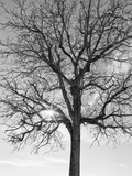 Eye of the Tree Photographic Print by Marco Carmassi