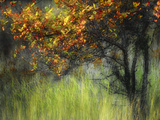 Bittersweet Stretched Canvas Print by Ursula Abresch