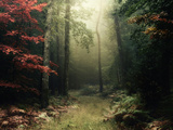 Legendary Forest in Brittany Reproduction photographique par Philippe Manguin
