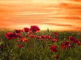 Rood Fotoprint van Marco Carmassi