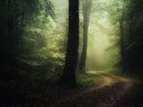 The Sacred Path Fotografie-Druck von Philippe Manguin