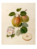 The Dutch Codlin Giclee Print by William Hooker