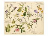 Wild flowers composite Gicléedruk van Lilian Snelling