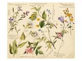 Wild flowers composite Lámina giclée por Lilian Snelling