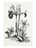 Iris histrio and Scilla mischtschenkoana Reproduction procédé giclée par Graham Stuart Thomas