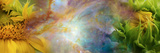 Two Sunflowers with Gaseous Nebula Photographic Print by  Panoramic Images