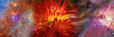 Hubble Galaxy with Red Chrysanthemums Photographic Print