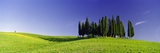 Trees on a Landscape, Val D'Orcia, Siena Province, Tuscany, Italy Photographic Print