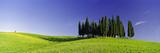 Trees on a Landscape, Val D'Orcia, Siena Province, Tuscany, Italy Valokuvavedos