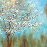 Kirschblüten Poster von  Nan