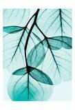 Teal Eucalyptus Posters van Albert Koetsier