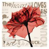Red Rose Love Stampe di Albert Koetsier