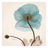 Iceland Poppy Believe Prints by Albert Koetsier