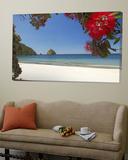 Pohutukawa Tree in Bloom and New Chums Beach, Coromandel Peninsula, North Island, New Zealand Prints by David Wall