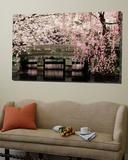 Cherry Blossoms, Mishima Taisha Shrine, Shizuoka Prints