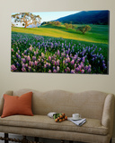 Carmel Valley in Spring Plakater av Douglas Steakley