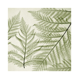 Ferns I Reproduction procédé giclée par Steven N. Meyers