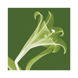 Lilies A (Negative) Giclee-trykk av Steven N. Meyers