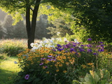 Summer Flower Adourn a Farm Garden Premium-Fotodruck von Kenneth Ginn