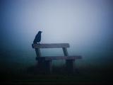 A Large Western Jackdaw Sits on a Bench in Dense Fog Fotografisk tryk af Alex Saberi