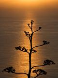 A View of an Eucalyptus Tree from Mirador De La Concepcion Photographic Print by Tino Soriano