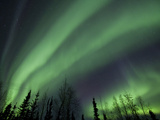 The Aurora Borealis Streaks the Sky Above Birch Creek Fotografisk trykk av Michael Melford