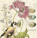 Bird Study 2 Posters par Paula Scaletta