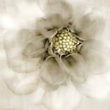 Whisper of Dahlia Poster par Donna Geissler